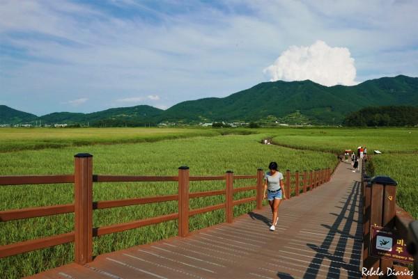 Suncheon Bay Ecological Park
