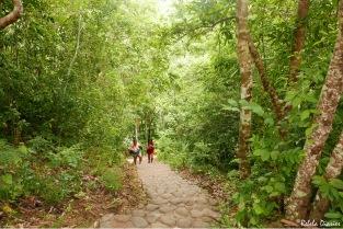 Cambugahay Falls Stairs