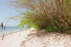Magalawa Island landscape