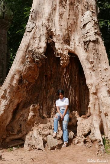 Ta Prohm Giant Tree